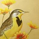 Meadowlark16