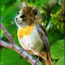 Catbird9